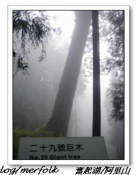 春節之旅Day1_奮起湖&阿里山 36.jpg