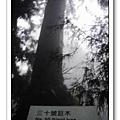 春節之旅Day1_奮起湖&阿里山 37.jpg