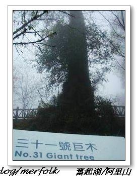 春節之旅Day1_奮起湖&阿里山 38.jpg