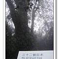 春節之旅Day1_奮起湖&阿里山 39.jpg