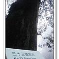 春節之旅Day1_奮起湖&阿里山 40.jpg