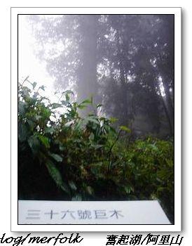 春節之旅Day1_奮起湖&阿里山 43.jpg