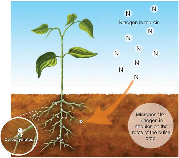 江璞老師專欄-準備托福TOEFL必看~固氮作用 Nitrogen Fixation
