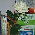 健鈞送的玫瑰