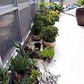 仙人掌溫室外