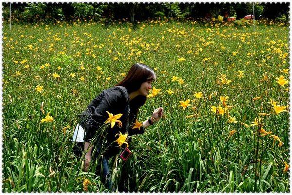 沐心泉休閒農場:黃澄澄的金針花~~沐心泉休閒農莊