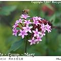 小花與蜜蜂.jpg