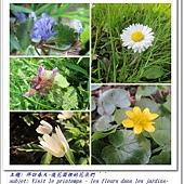 les fleurs dans les jardins