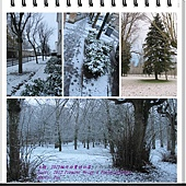 1ere neige a Fontainebleau 4
