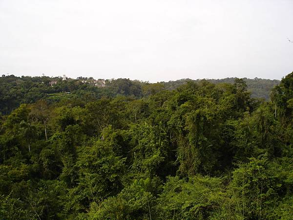 Iguazu雨林.jpg