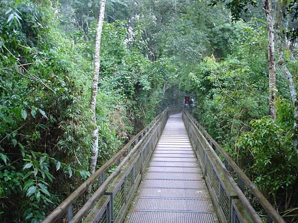 通往瀑布的林間步道.jpg