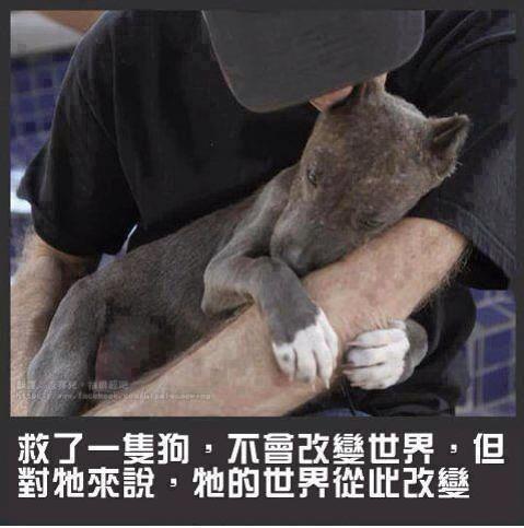 領養_救了一隻狗