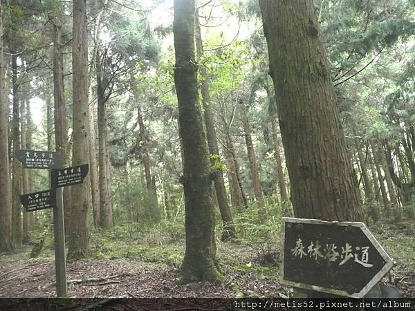 賞鳥步道 (12).JPG