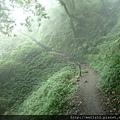 檜山巨木步道1.JPG