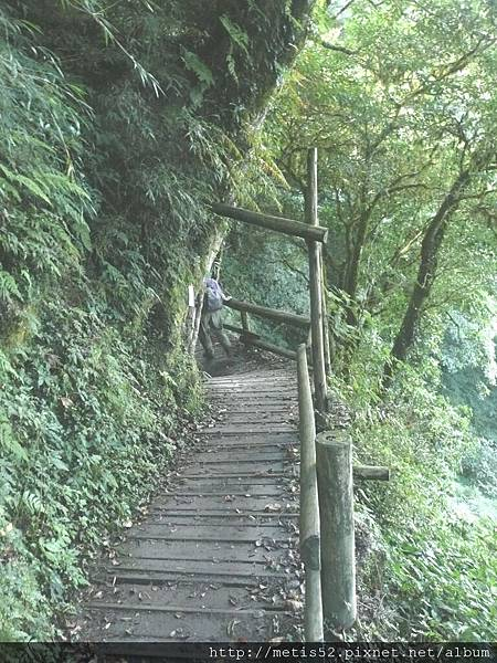 檜山巨木步道 (7).JPG