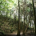 檜山巨木步道 (16).JPG
