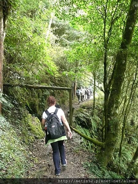 檜山巨木步道 (19).JPG