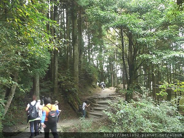 檜山巨木步道 (23).JPG
