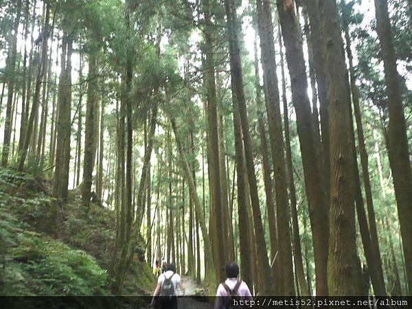 檜山巨木步道 (25).JPG