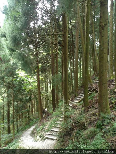 檜山巨木步道 (32).JPG