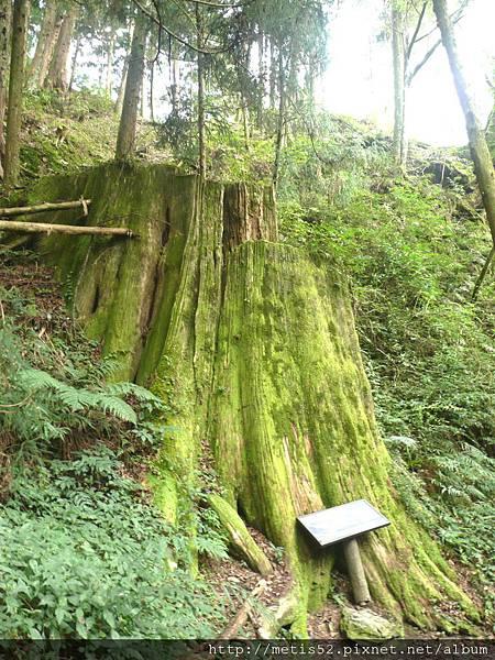 檜山巨木步道 (49).JPG