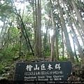 檜山巨木步道 (50).JPG