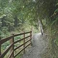 檜山巨木步道 (51).JPG