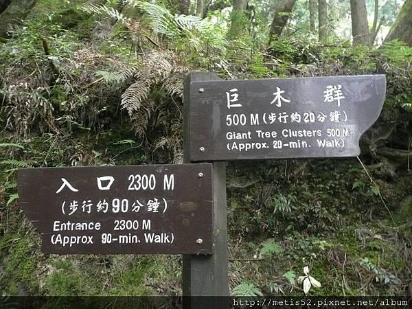 檜山巨木步道 (52).JPG