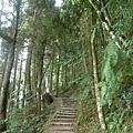 檜山巨木步道 (58).JPG