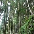 檜山巨木步道 (59).JPG