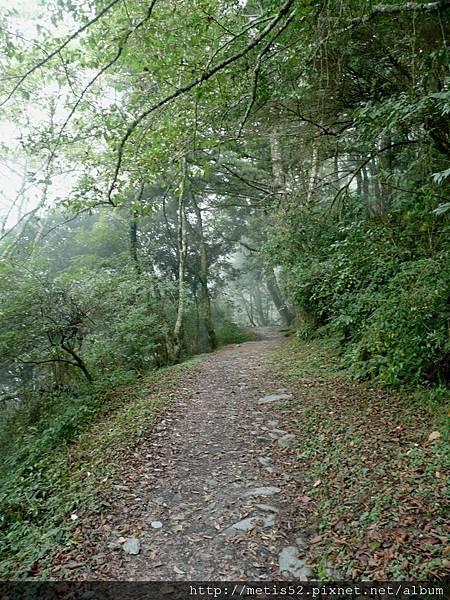 檜山巨木步道 (67).JPG