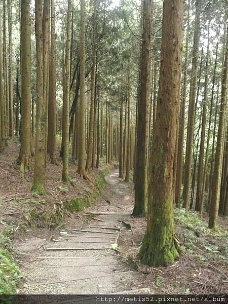 瀑布步道 (2).JPG