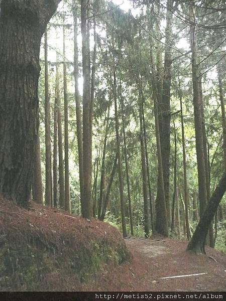 瀑布步道 (3).JPG