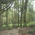 瀑布步道 (10).JPG