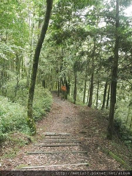 瀑布步道 (11).JPG