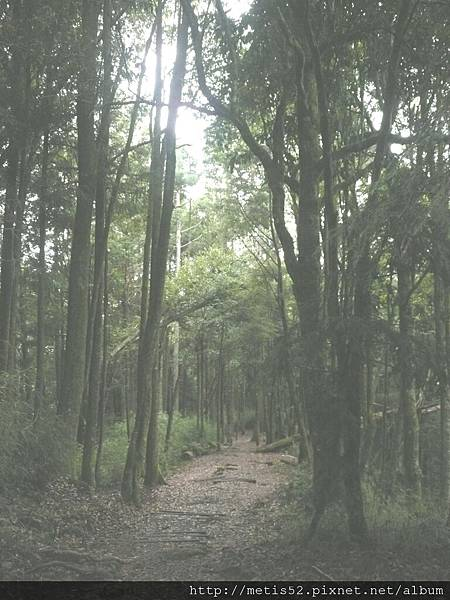 瀑布步道 (13).JPG