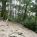 瀑布步道 (17).JPG