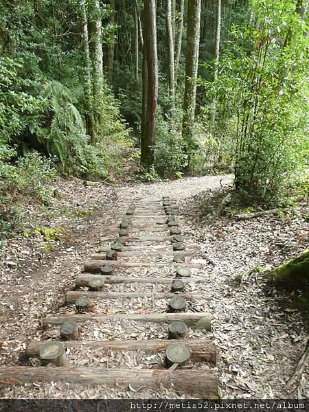 瀑布步道 (20).JPG