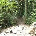 瀑布步道 (21).JPG