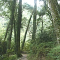 瀑布步道 (24).JPG