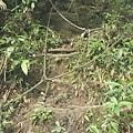 第一條攀岩路2.JPG