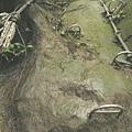 第三條攀岩路1 (2).JPG