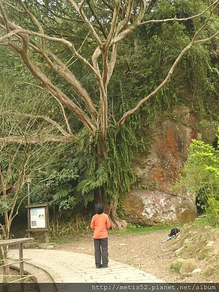 風化岩壁 (14)