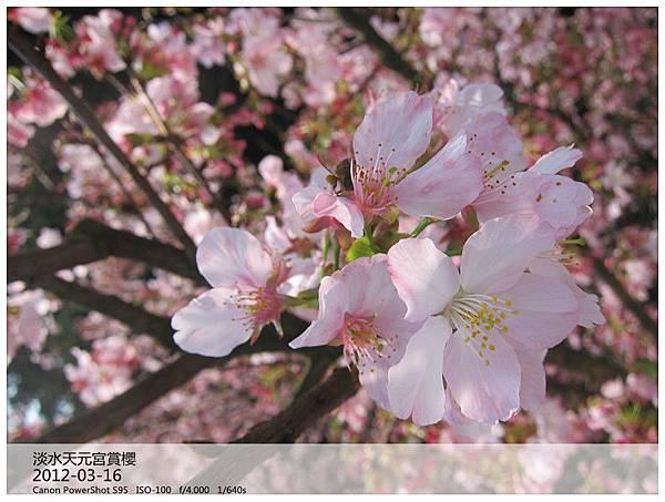 IMG_5224_副本