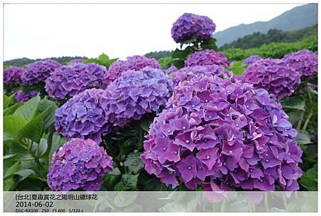 DSC09632_副本.jpg