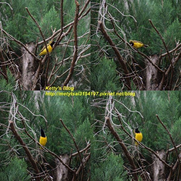 Bird-4.jpg