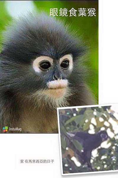 Monkey-4.jpg