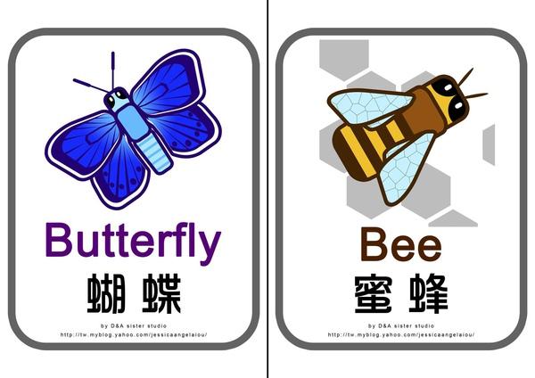 教學圖卡-蝴蝶蜜蜂拷貝.jpg