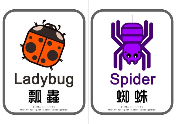 教學圖卡-瓢蟲蜘蛛拷貝.jpg
