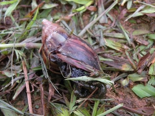 「陸螺」的圖片搜尋結果
